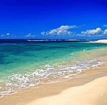 ハワイアンモチーフ 波