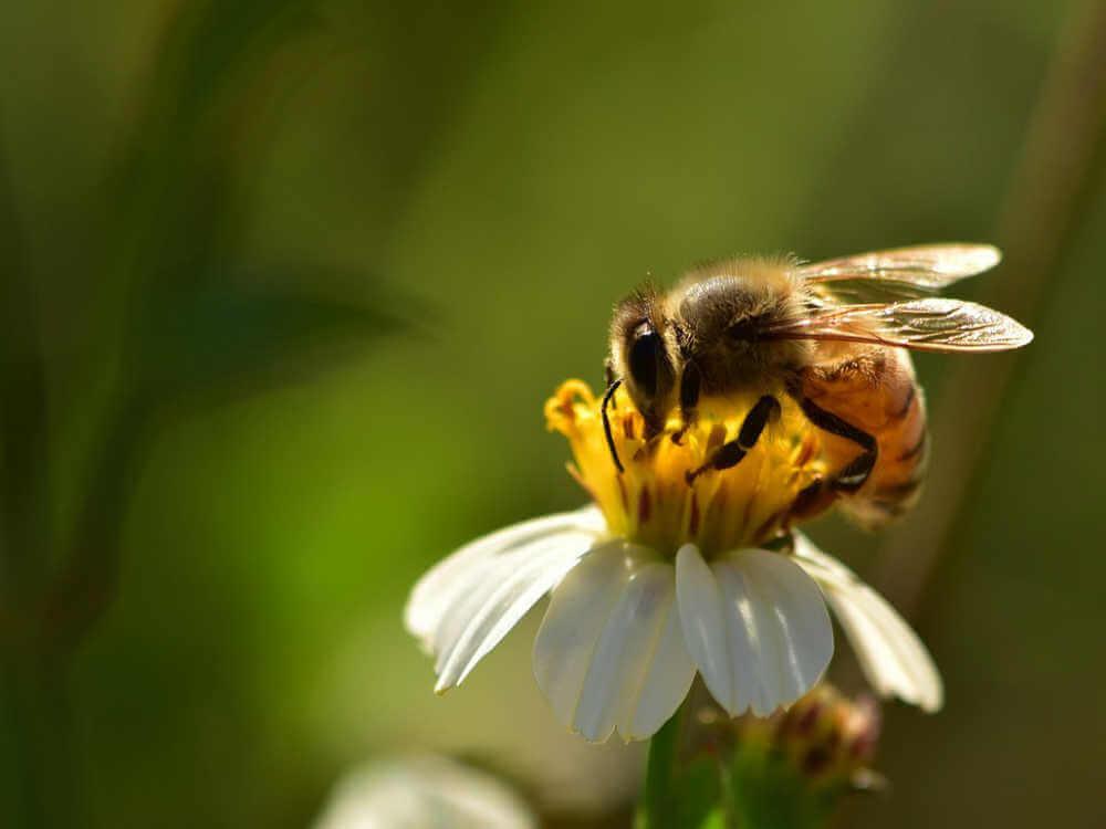 昆虫モチーフの中でも最も人気なのがこの蜜蜂