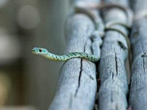 蛇は古来より「吉兆」や「幸運」、「永遠」といった意味が込められた象徴とされてきた生き物